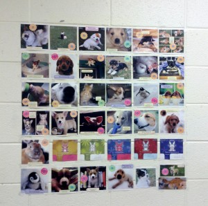 10-wall of cute